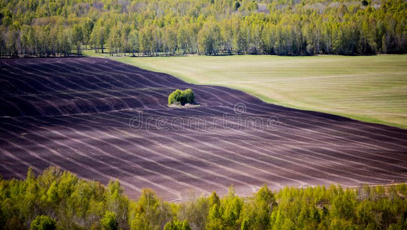 campo Mitad-arado rodeado por el bosque fotografía de archivo libre de regalías