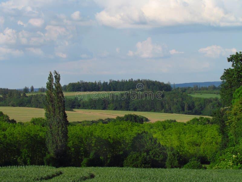 Campo montanhoso rural do verão com o prado, as tentativas e as nuvens do verde esmeralda no céu imagens de stock