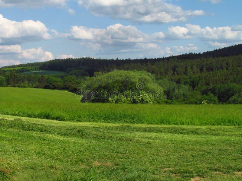 Campo montanhoso rural do ver?o com o prado, as tentativas e as nuvens do verde esmeralda no c?u imagem de stock royalty free