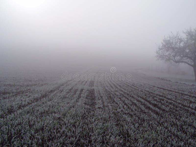 Campo na névoa. imagens de stock