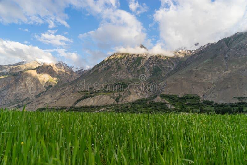 Campo na vila de Askole, K2 passeio na montanha do arroz, Paquistão imagens de stock royalty free