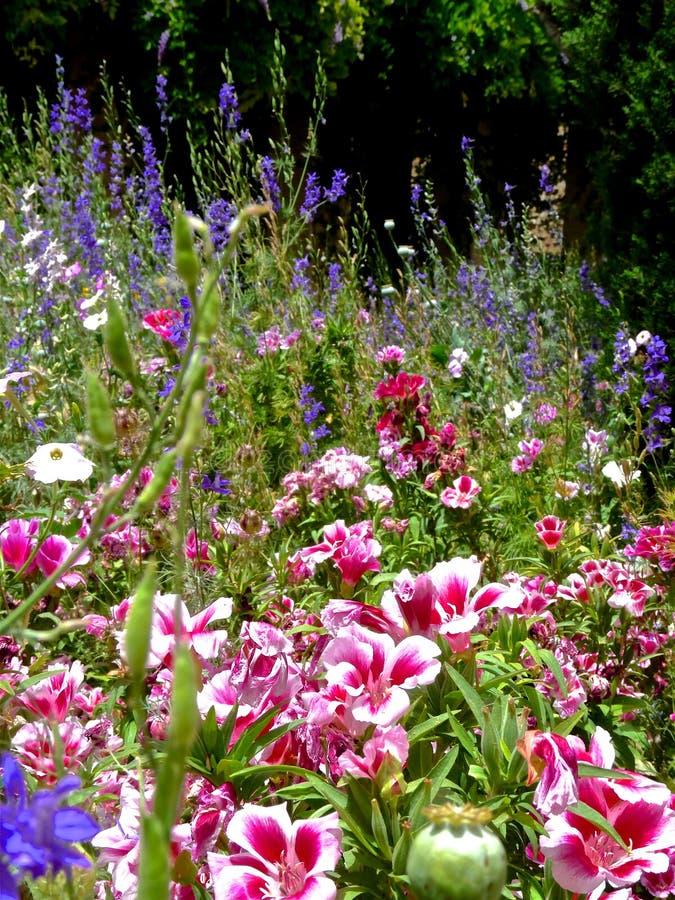 Campo natural coberto de vegetação com as flores fotos de stock