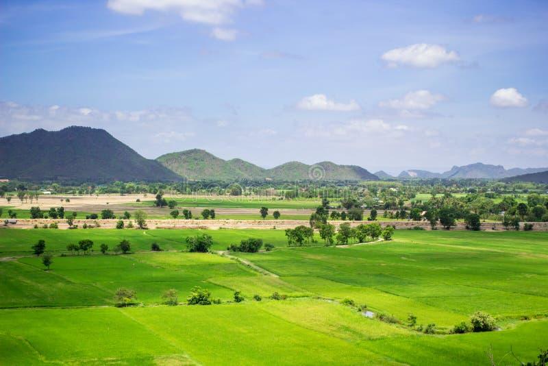 Download Campo natural del arroz foto de archivo. Imagen de verde - 41916746