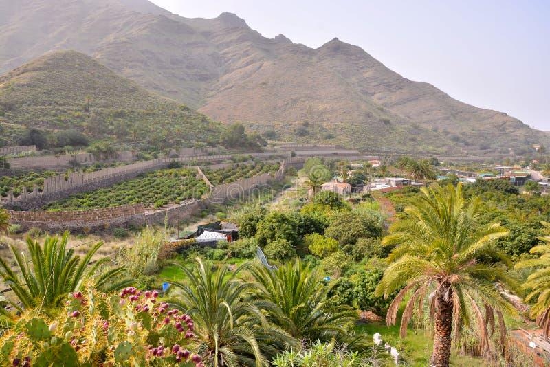 Campo natural europeu em Agaete Gran canaria imagens de stock royalty free