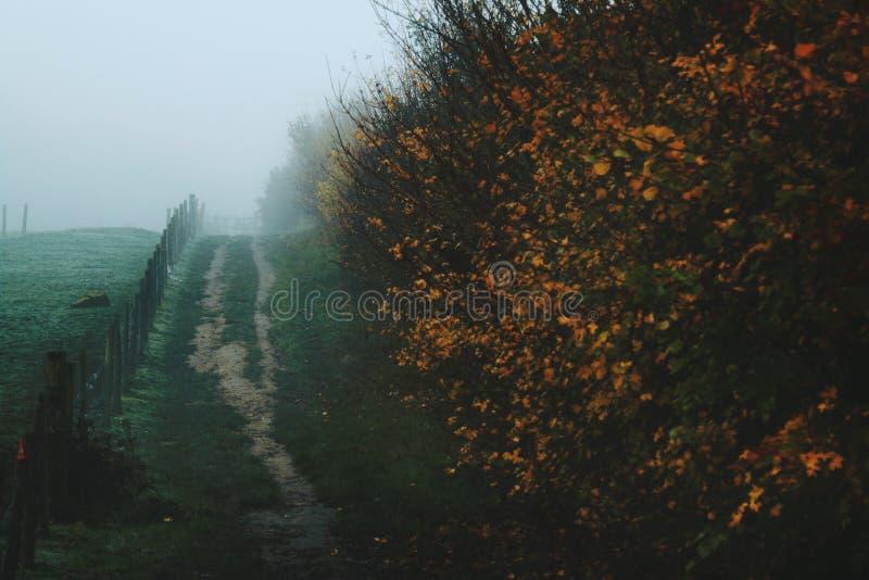 Campo nebbioso con il percorso di autunno immagine stock libera da diritti