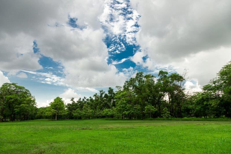Campo nel giardino immagine stock
