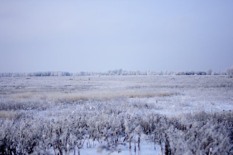Campo nevado con los arbustos y los árboles en la distancia imágenes de archivo libres de regalías