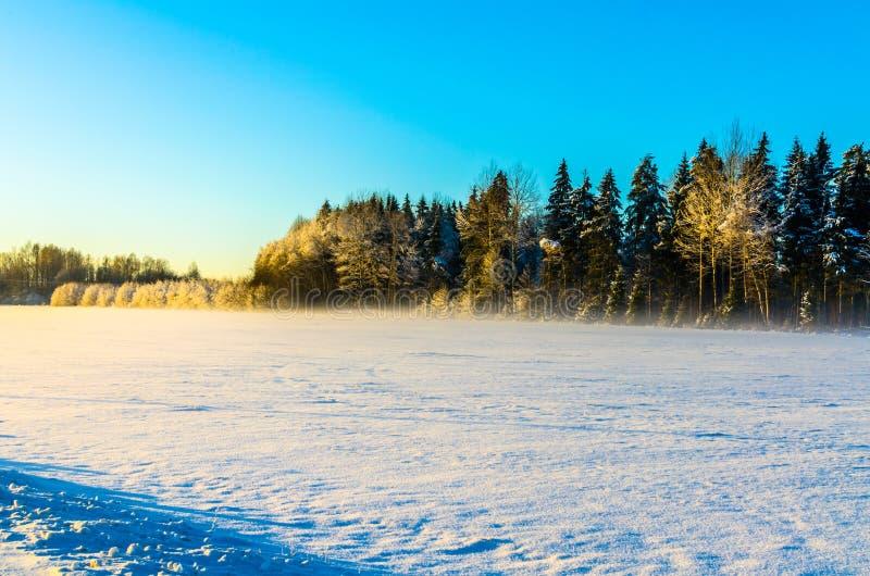 Campo Nevado con un fondo del bosque debajo de un cielo azul claro imagenes de archivo