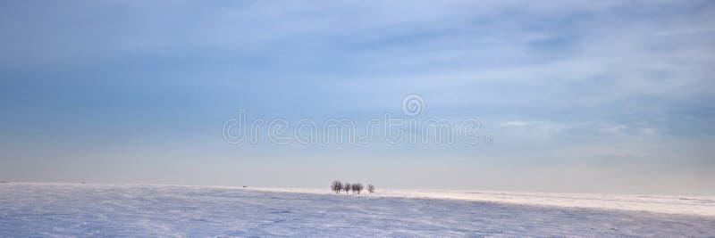Campo nevado do inverno com árvores foto de stock royalty free