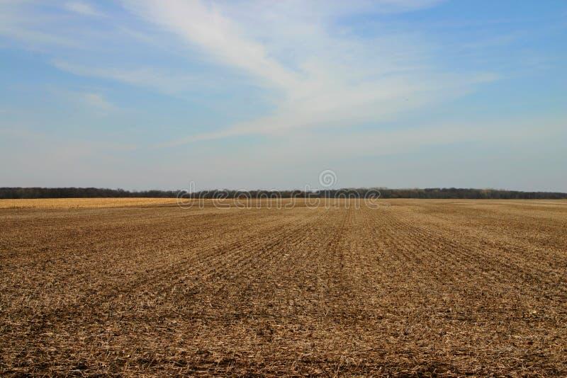 Campo no inverno atrasado foto de stock royalty free