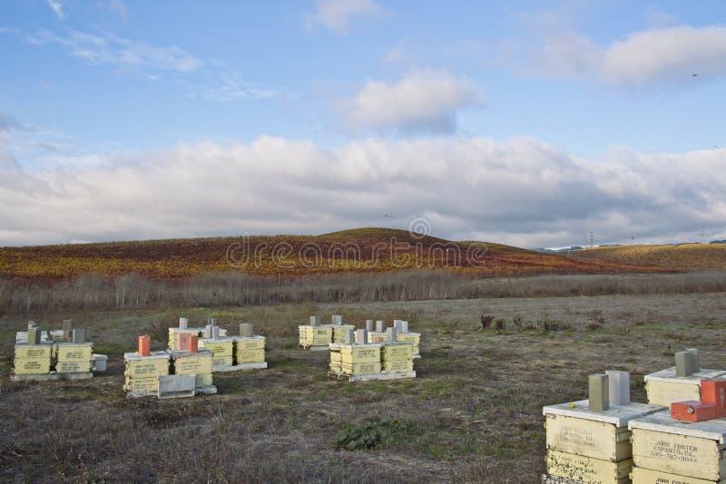 Campo novo do vinhedo na zona leste de Petaluma, CA fotografia de stock