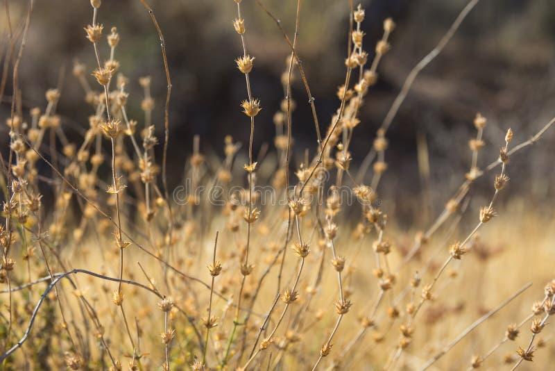 Campo outonal bonito do prado do papel de parede do fundo com tons da terra mornos da grama macia seca das flores das plantas Atm imagens de stock