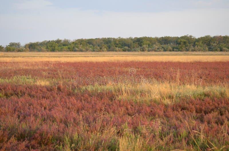 Campo púrpura grande de flores salvajes Fondo imagen de archivo libre de regalías