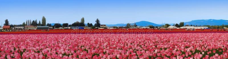 Campo panoramico del tulipano fotografie stock libere da diritti