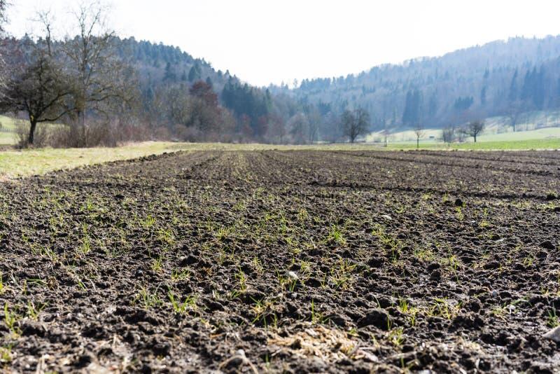 Campo para cultivar a terra agrícola foto de stock