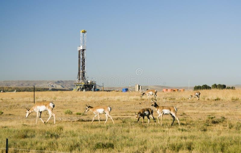 Campo petrolífero imagem de stock