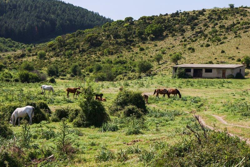 Campo pintoresco con los caballos en Cerdeña foto de archivo libre de regalías