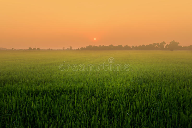 Campo, puesta del sol y cielo imagen de archivo libre de regalías