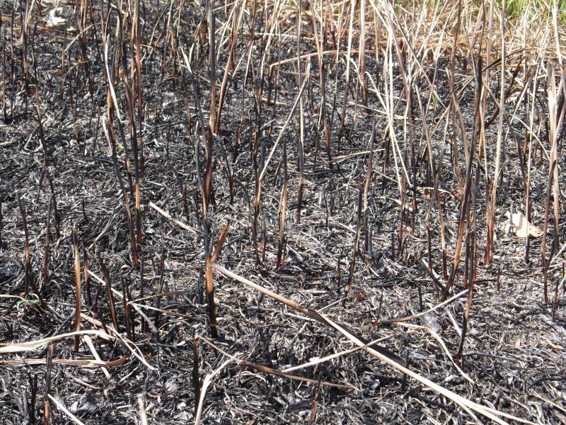 Campo quemado fotos de archivo