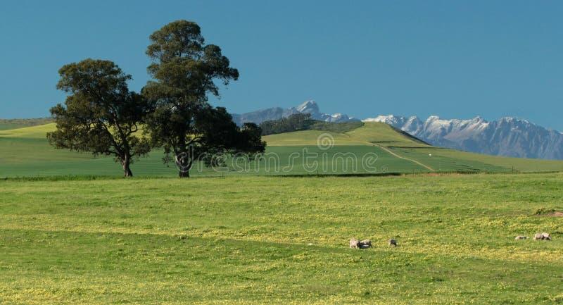 Campo riposante e verde con neve sulle cime della montagna fotografia stock