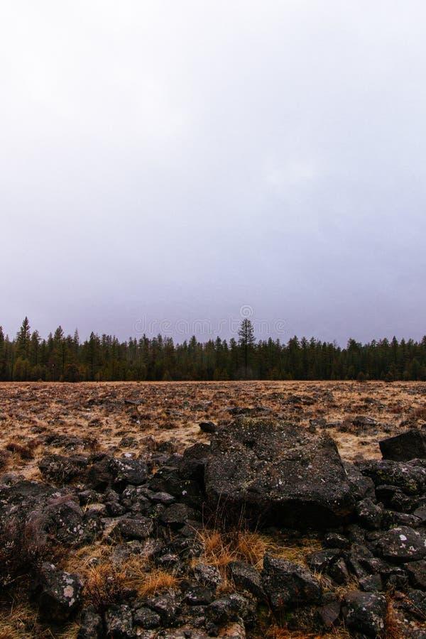 Campo rochoso bonito com uma floresta verde surpreendente no horizonte imagem de stock royalty free
