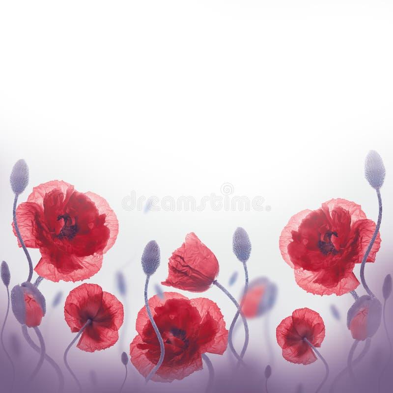 Download Campo Rojo De Las Amapolas Y Acianos Azules Imagen de archivo - Imagen de floral, cielo: 42435365