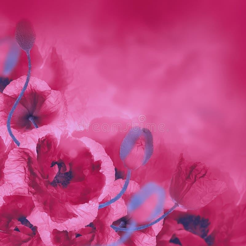 Download Campo Rojo De Las Amapolas Y Acianos Azules Imagen de archivo - Imagen de azul, cornflowers: 42435373