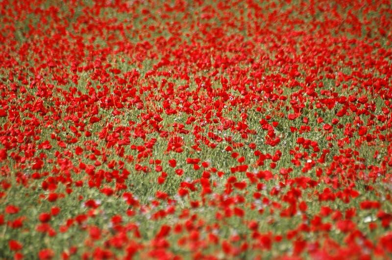 Campo rosso immagini stock libere da diritti
