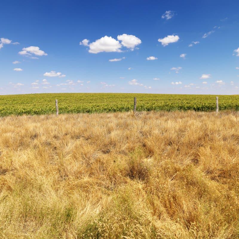 Campo rural. foto de stock royalty free