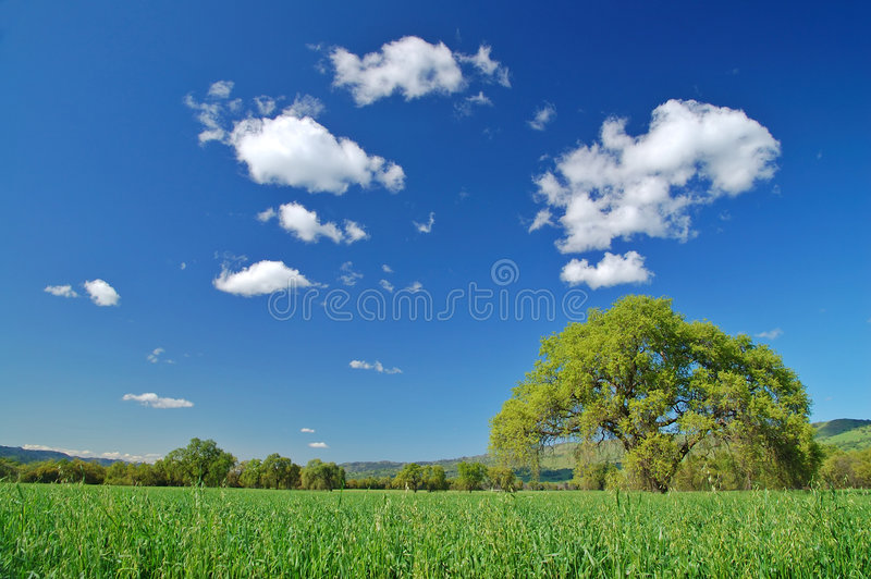 Campo rural imagem de stock royalty free