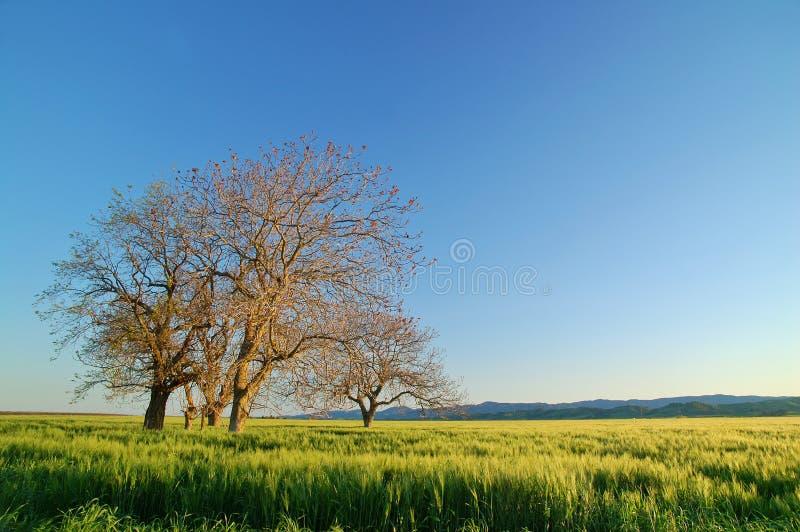 Campo rural fotografia de stock royalty free