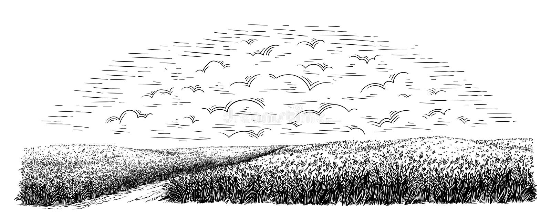 Campo rural con trigo maduro en el fondo de nubes Vector libre illustration