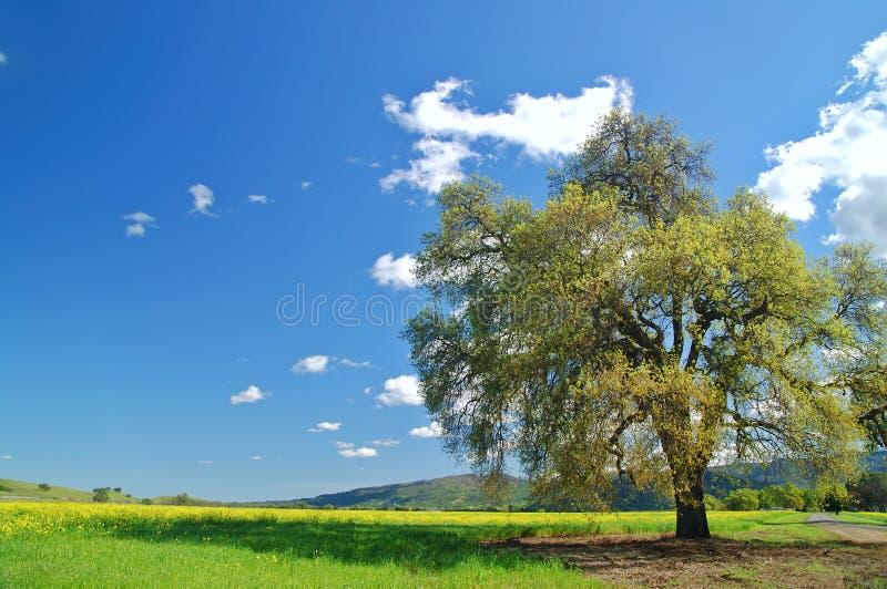 Campo rural da mola foto de stock