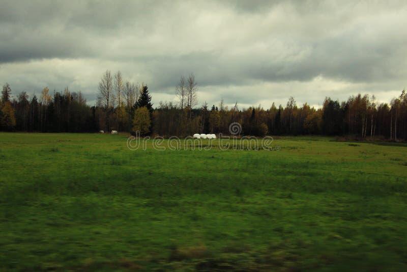 Campo rural sob o céu inclemente imagens de stock