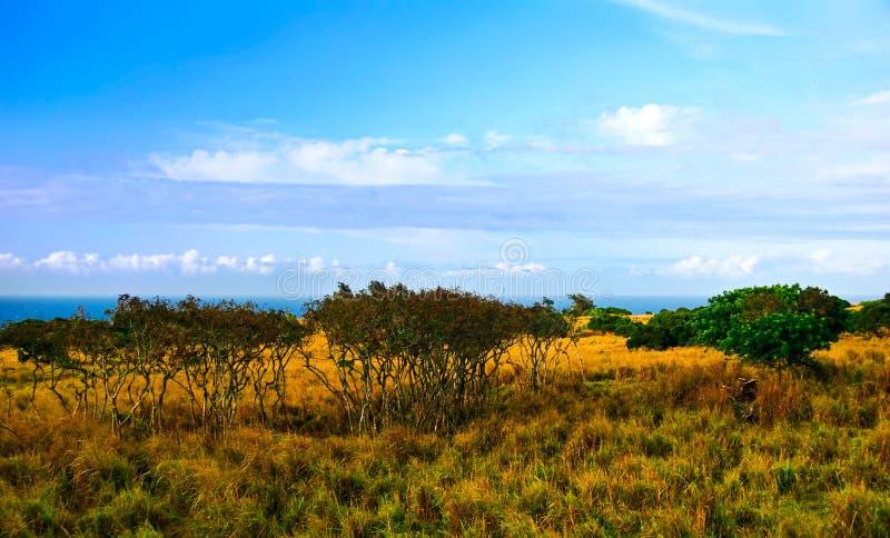 Campo salvaje de Hawaii imagenes de archivo