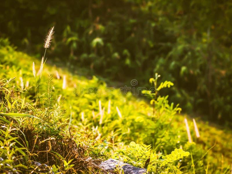 Campo salvaje de la hierba en la puesta del sol, rayos suaves del sol, naturaleza de tono caliente del verano Paisaje hermoso hol foto de archivo libre de regalías