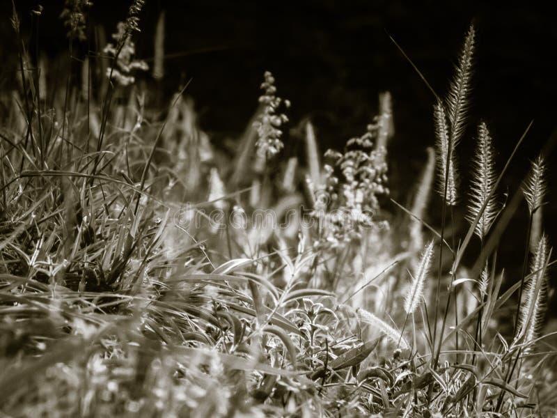 Campo salvaje de la hierba en la puesta del sol, rayos suaves del sol, naturaleza de tono caliente del verano imagen de archivo