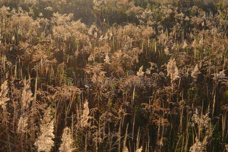 Campo salvaje del otoño en los rayos del sol de la tarde o de la mañana Brown y sombras de oro Hierbas de campo salvajes Fondo ab fotografía de archivo libre de regalías