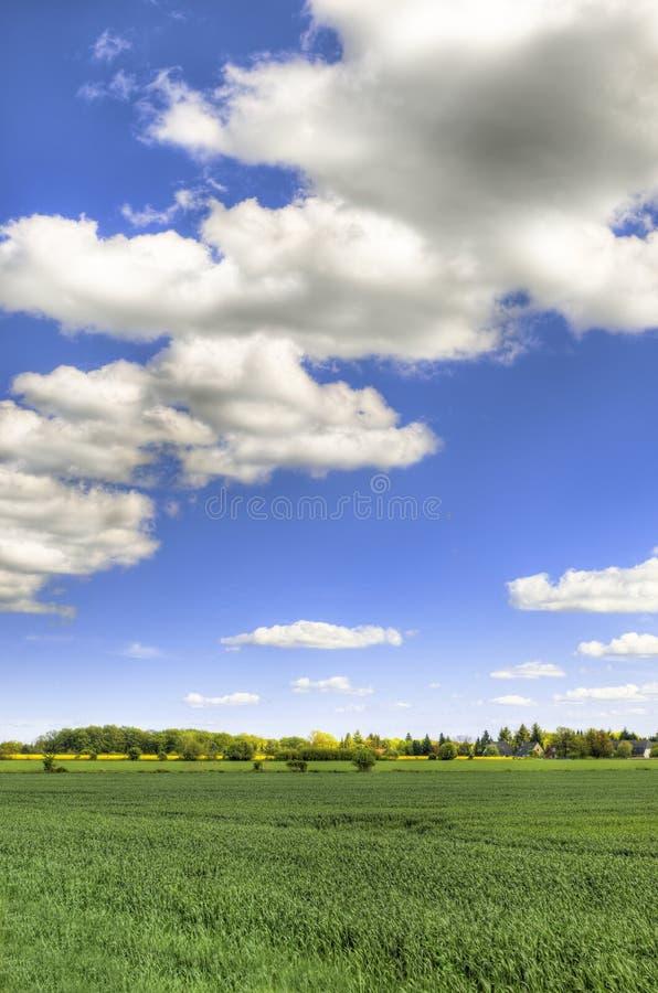 Campo scenico con cielo blu - HDR fotografia stock libera da diritti