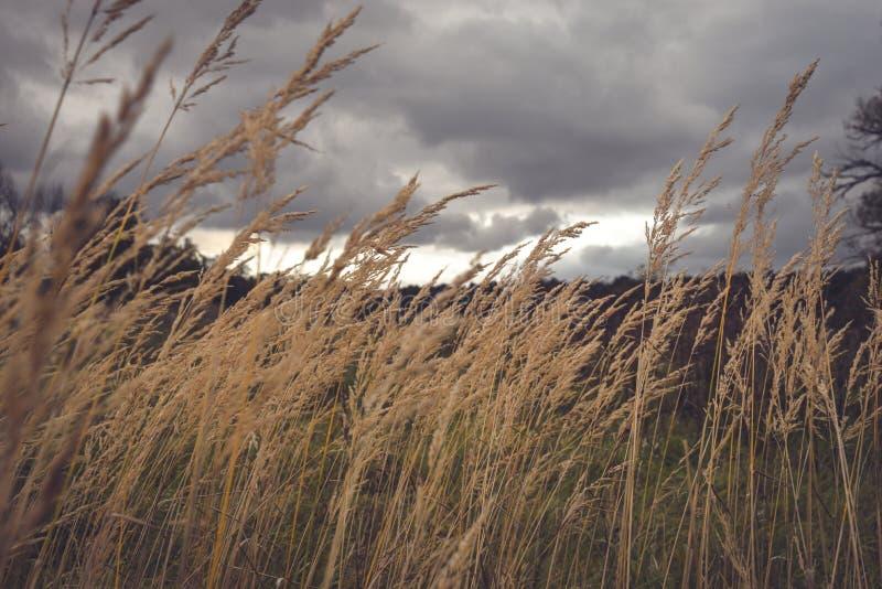Campo scuro prima della tempesta immagine stock