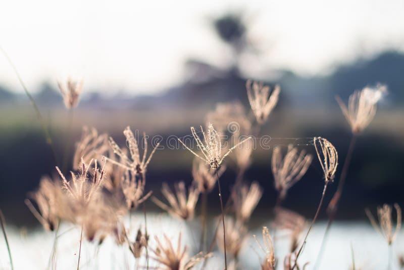 Campo selvaggio di erba sul tramonto, raggi molli del sole, tonalità calda, fondo della natura della sfuocatura immagine stock