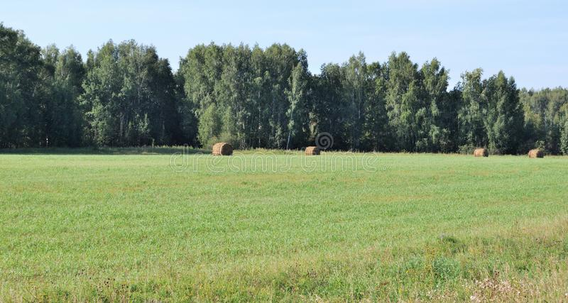Campo Siberian do feno imagens de stock