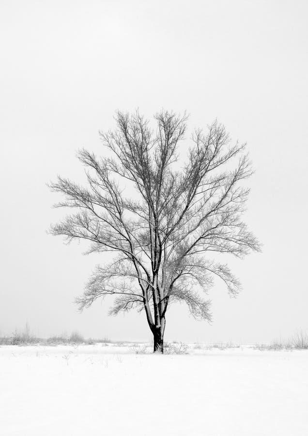 Campo solo di inverno di quantità dell'albero fotografia stock