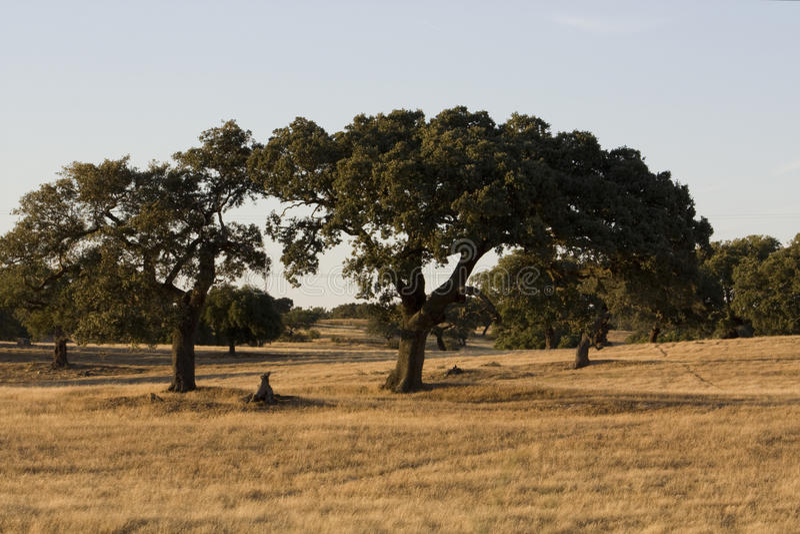 Campo típico de Alentejo imagen de archivo