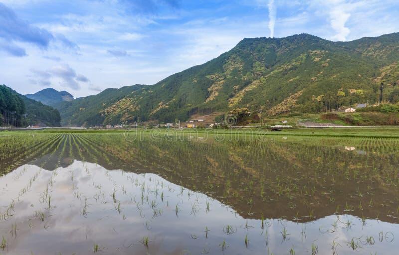 Campo Terraced do arroz em Maruyama Senmaida, cidade de Kumano, Mie Prefecture fotografia de stock