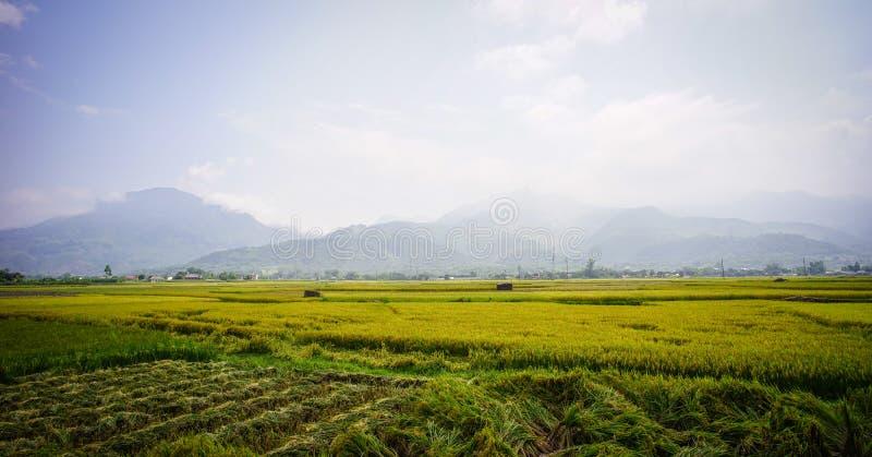 Campo Terraced do arroz em Vietname do norte foto de stock