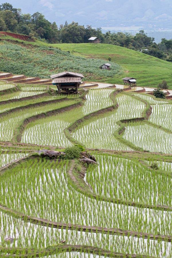 Campo Terraced verde do arroz imagens de stock