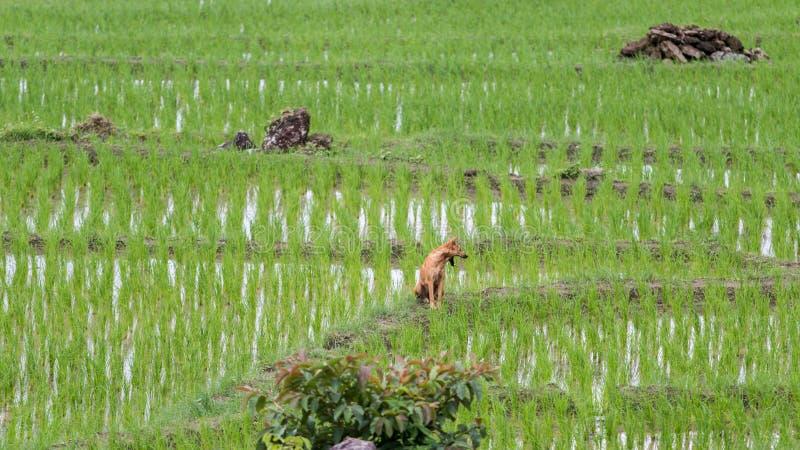 Campo Terraced verde do arroz imagens de stock royalty free