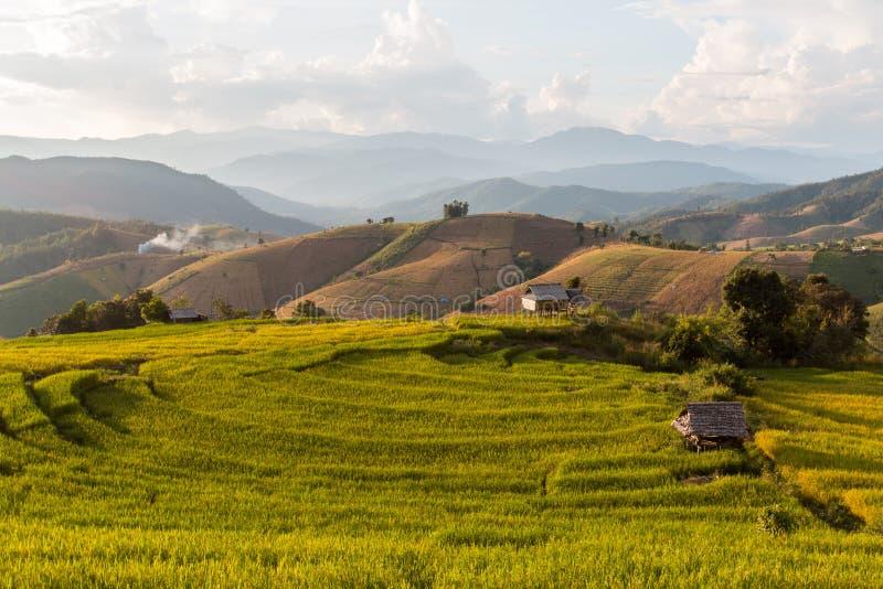 Campo Terraced verde do arroz foto de stock royalty free
