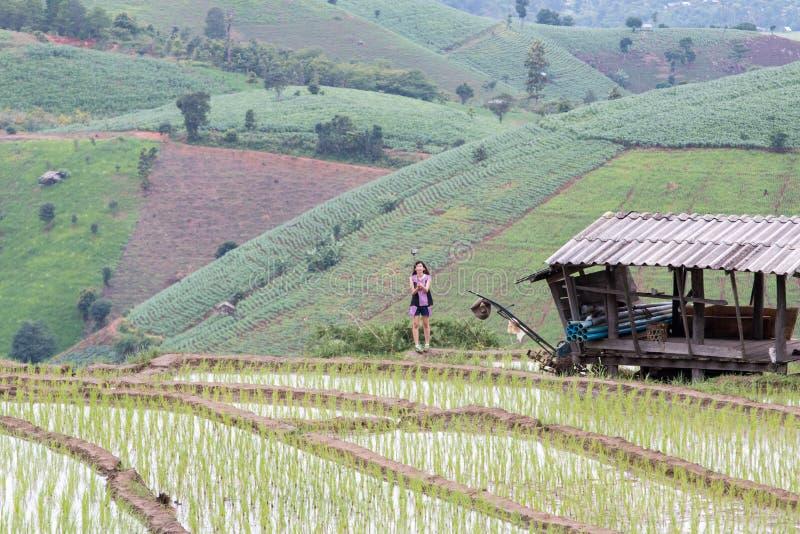 Campo Terraced verde do arroz fotografia de stock royalty free